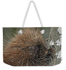 Weekender Tote Bag featuring the photograph Learning To Climb by Glenn Gordon
