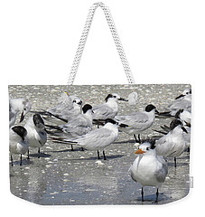 Weekender Tote Bag featuring the photograph Least Terns by Melinda Saminski