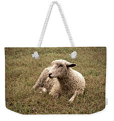 Leicester Sheep In The Dewy Grass Weekender Tote Bag