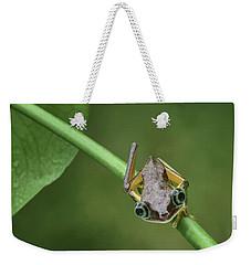 Weekender Tote Bag featuring the photograph Lemur Tree Frog - 1 by Nikolyn McDonald