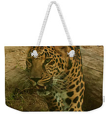 Weekender Tote Bag featuring the photograph Leopard by Chris Flees