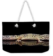 Leopard Gecko Eublepharis Macularius Isolated On Black Background Weekender Tote Bag by Sergey Taran