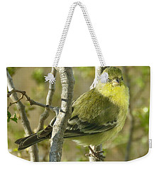 Lesser Goldfinch 1 Weekender Tote Bag