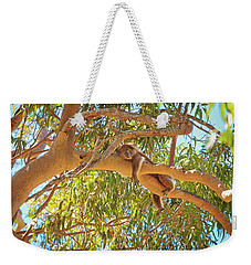Weekender Tote Bag featuring the photograph Life's Hard, Yanchep National Park by Dave Catley