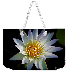 Weekender Tote Bag featuring the photograph Light Blue Water Lily by Chad and Stacey Hall