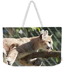 Weekender Tote Bag featuring the photograph Lion Around by Laddie Halupa
