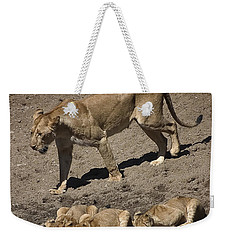 Lion Cubs And Mom Get A Drink Weekender Tote Bag by Darcy Michaelchuk