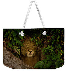 Lion In A Tree-signed-#9841 Weekender Tote Bag