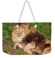 Lion Resting In The Sun Weekender Tote Bag