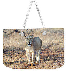 Lioness In Kruger Weekender Tote Bag by Pravine Chester