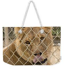 Lioness Licks Weekender Tote Bag