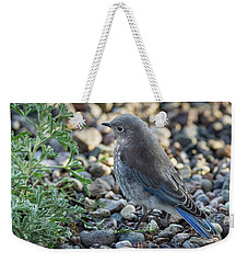 Little Fledgling Mountain Bluebird Weekender Tote Bag