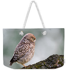 Little Owl Chick Practising Hunting Skills Weekender Tote Bag by Roeselien Raimond