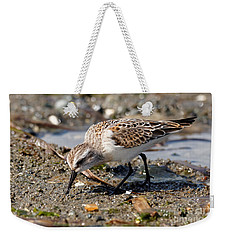 Weekender Tote Bag featuring the photograph Little Western Sandpiper by Sue Harper