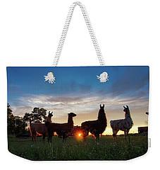 Llamas At Sunset Weekender Tote Bag