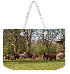 Weekender Tote Bag featuring the photograph Alpacas In Scotland by Jeremy Lavender Photography
