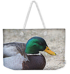 Weekender Tote Bag featuring the photograph Lone Mallard Duck by Kathy White