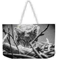 Lone Wolf Of The Smithsonian II Weekender Tote Bag