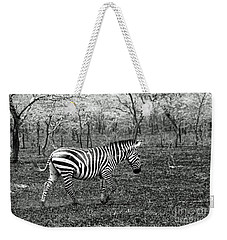 Lone Zebra Weekender Tote Bag by Michael Cinnamond