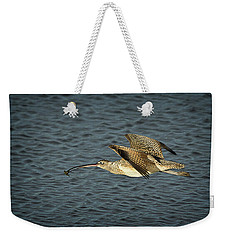 Long-billed Curlew In Flight Weekender Tote Bag