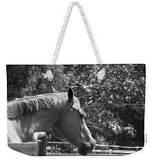 Weekender Tote Bag featuring the photograph Longing by Sandi OReilly