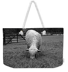 Longwool Sheep Grazing Weekender Tote Bag