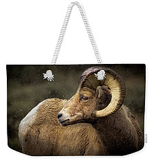 Looking Back - Bighorn Sheep Weekender Tote Bag