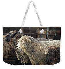 Looking For The Shepherd Weekender Tote Bag