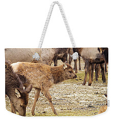 Weekender Tote Bag featuring the photograph Lost In The Herd by Jeff Swan