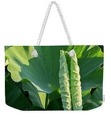 Weekender Tote Bag featuring the photograph Lotus Leaf 2017  3 by Buddy Scott