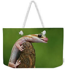 Weekender Tote Bag featuring the photograph Lovely Water - Velvet Gecko by Nikolyn McDonald