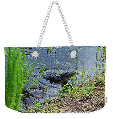 Lunging Bull Gator Weekender Tote Bag by Warren Thompson