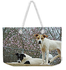 Maddy And Sammy Springtime Weekender Tote Bag