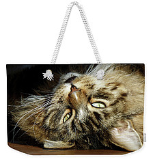 Weekender Tote Bag featuring the photograph Main Coon, Crazy. by Roger Bester