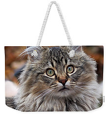 Weekender Tote Bag featuring the photograph Maine Coon Cat by Rona Black