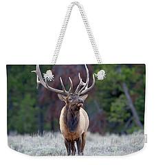 Majestic Bull Elk Weekender Tote Bag by Jack Bell