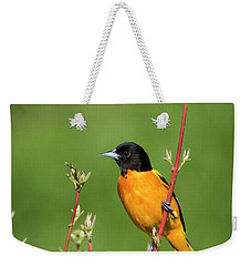 Male Baltimore Oriole Posing Weekender Tote Bag