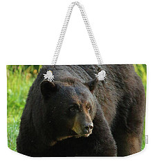 Weekender Tote Bag featuring the photograph Male Black Bear In Late Light by Coby Cooper