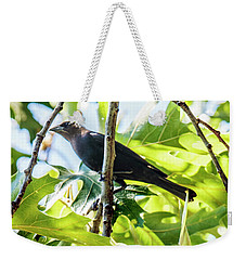 Male Brown-headed Cowbird Weekender Tote Bag