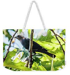 Male Brown-headed Cowbird Weekender Tote Bag