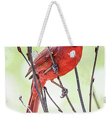 Male Cardinal Perched On Budding Stem Weekender Tote Bag