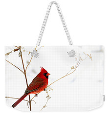 Male Cardinal Posing In The Snow Weekender Tote Bag