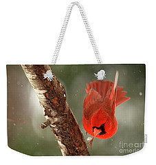 Weekender Tote Bag featuring the photograph Male Cardinal Take Off by Darren Fisher