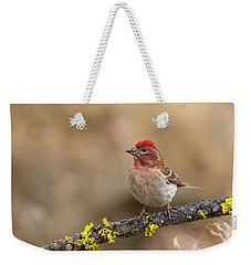 Male Cassins Finch Weekender Tote Bag