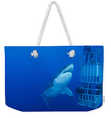 Male Great White With Cage, Guadalupe Weekender Tote Bag by Todd Winner