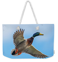 Male Mallard Fly By Weekender Tote Bag