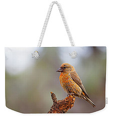 Male Red Crossbill Weekender Tote Bag by Doug Lloyd