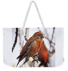 Male Red Crossbills Weekender Tote Bag by Robert Potts