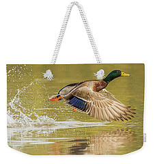 Mallard Duck 1952-112017-2cr Weekender Tote Bag