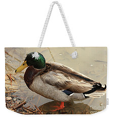Weekender Tote Bag featuring the photograph Mallard Duck by Kim Henderson